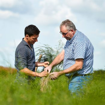 Biologische aspergeplanten home